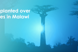 Sustainable future, fruitful office